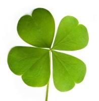 four-leaf-clover (196x200).jpg